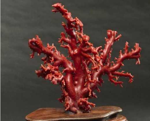 天然珊瑚的主要几个特征
