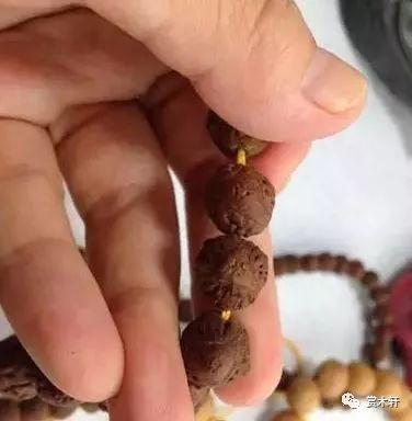 酸棗核尼泊爾鳳眼你分得清楚吗